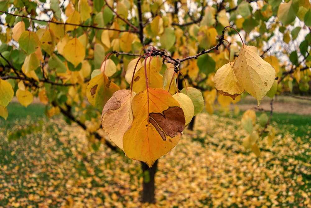 yellow leaf on brown tree branch during daytime
