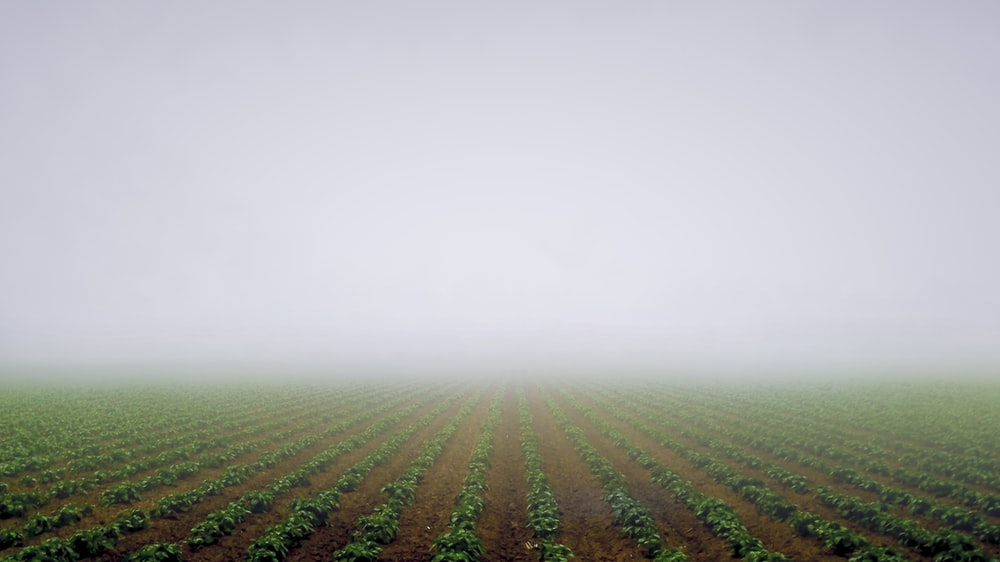 green grass field during foggy day