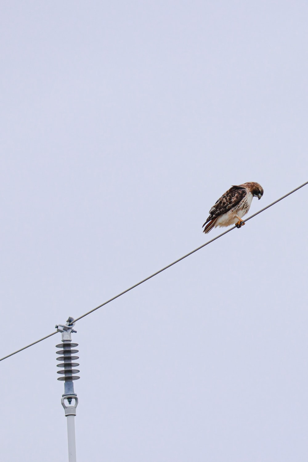 brown and white bird on black electric cable