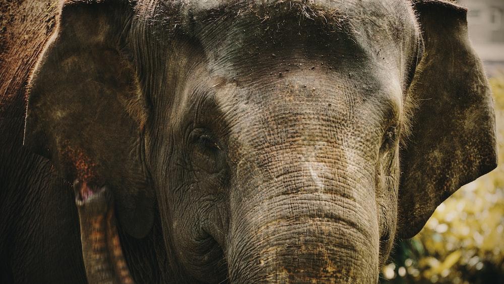 black elephant with white eyes