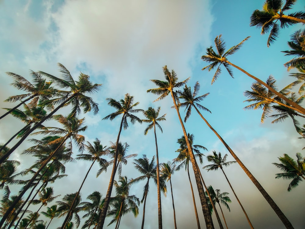 green coconut palm trees under white clouds during daytime