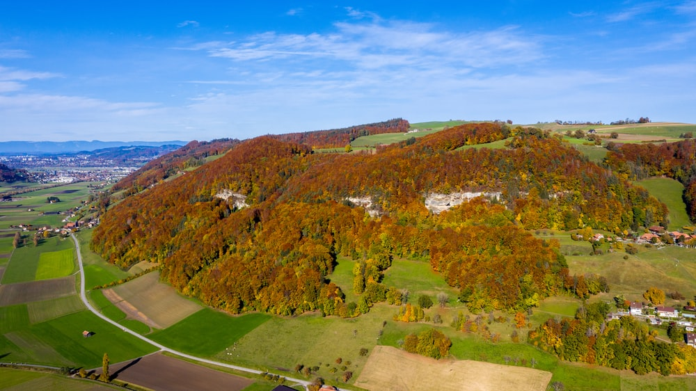 green trees on hill under blue sky during daytime