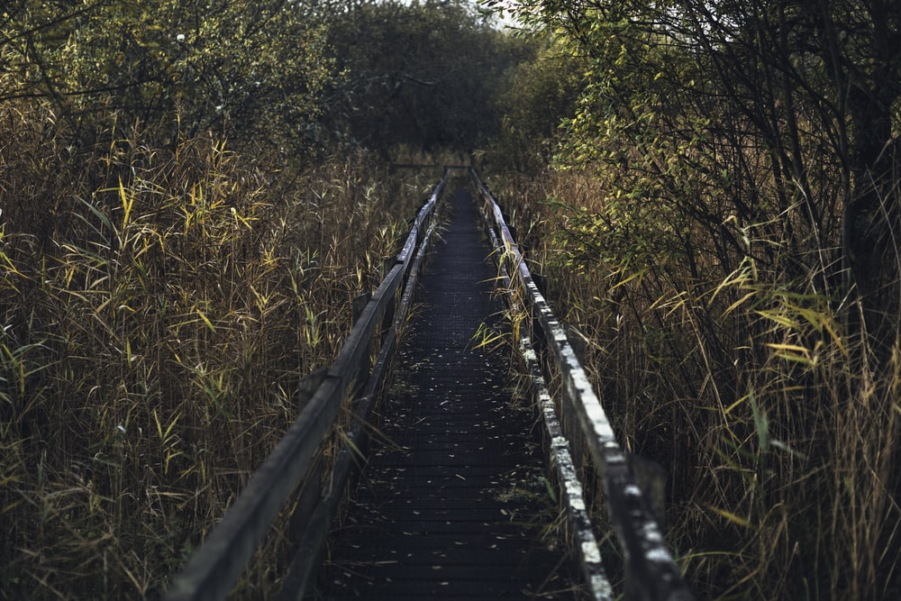 black wooden bridge in between green trees during daytime