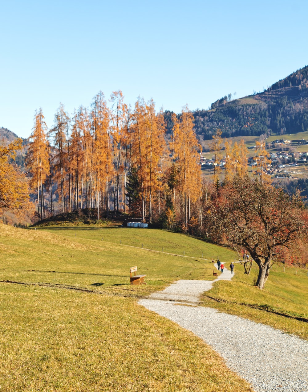 people walking on pathway near trees during daytime