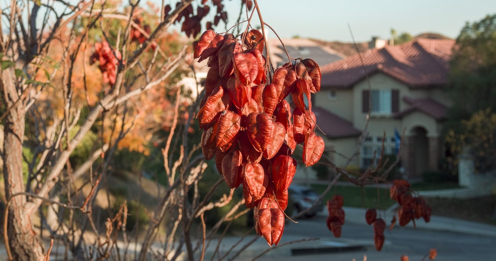 red leaves on brown tree branch