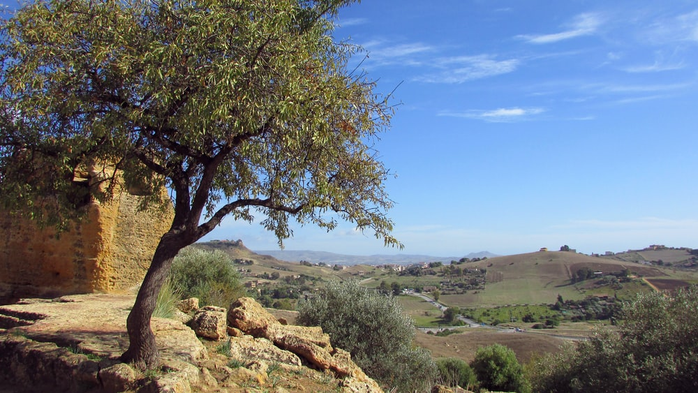green tree on brown rock formation under blue sky during daytime