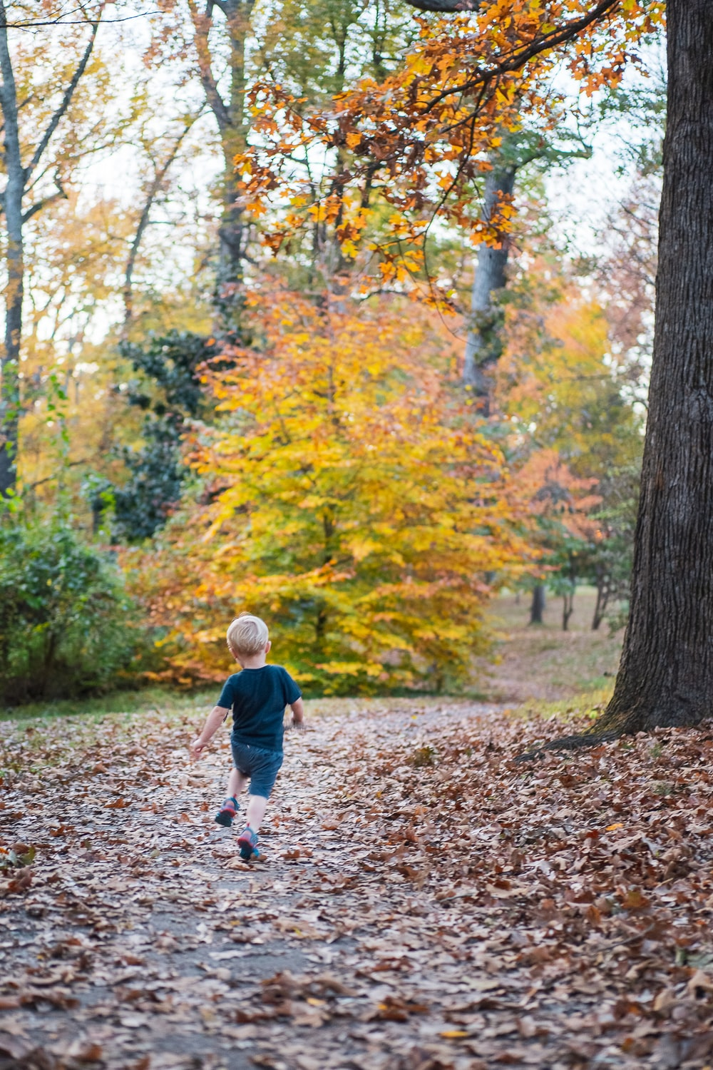 child in blue jacket walking on brown leaves on ground surrounded by trees during daytime