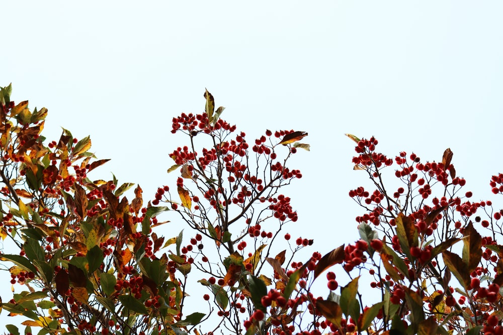 red and green leaves during daytime