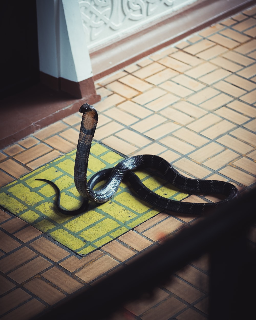 black and yellow snake on brown floor