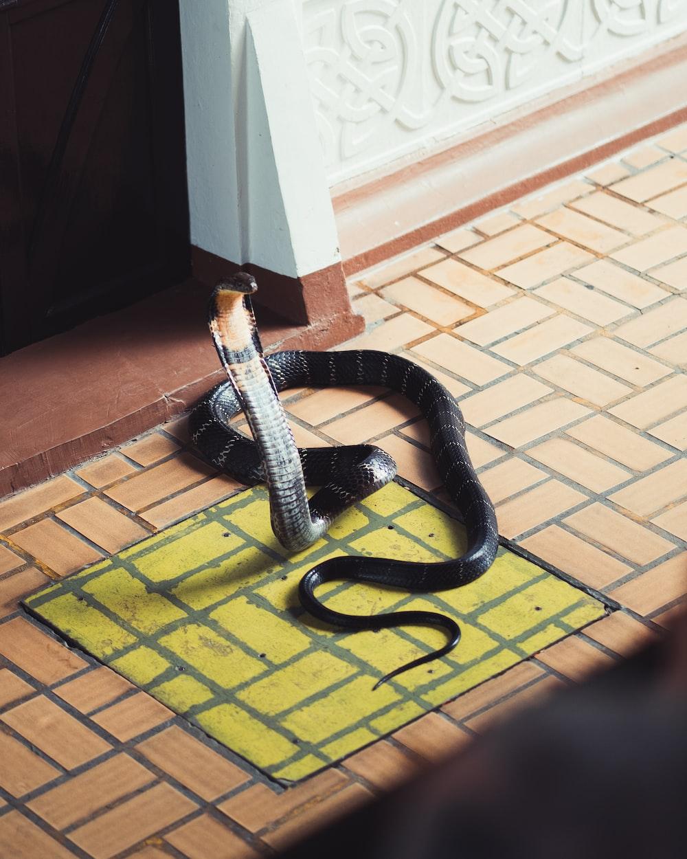 black and white snake on brown floor