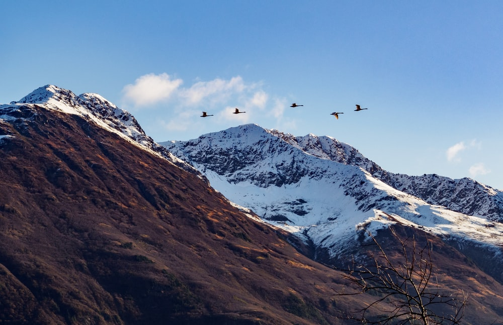 birds flying over snow covered mountain during daytime