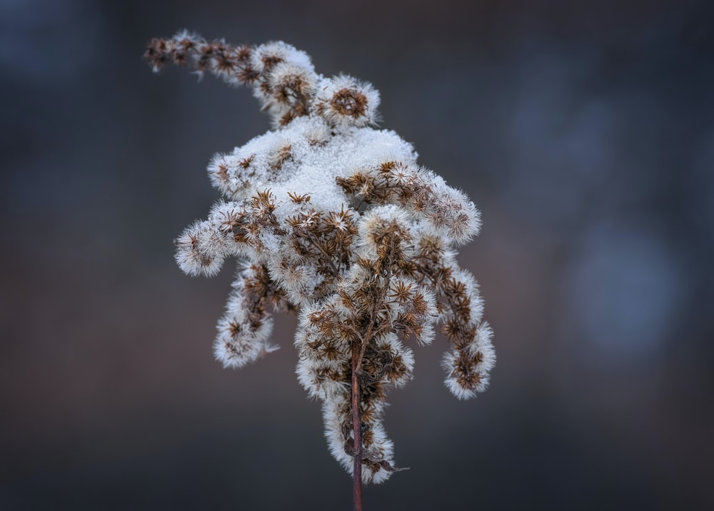 white and brown plant in close up photography