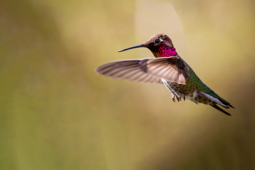 green and brown humming bird flying during daytime