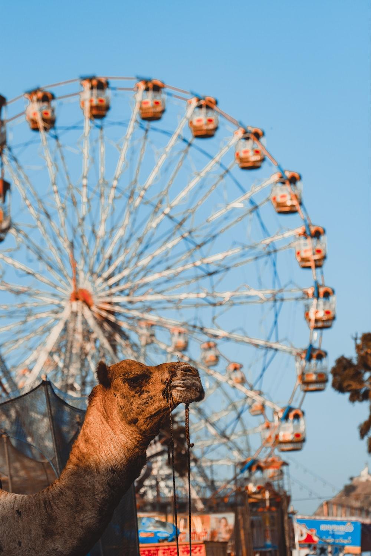 brown horse on black metal cage