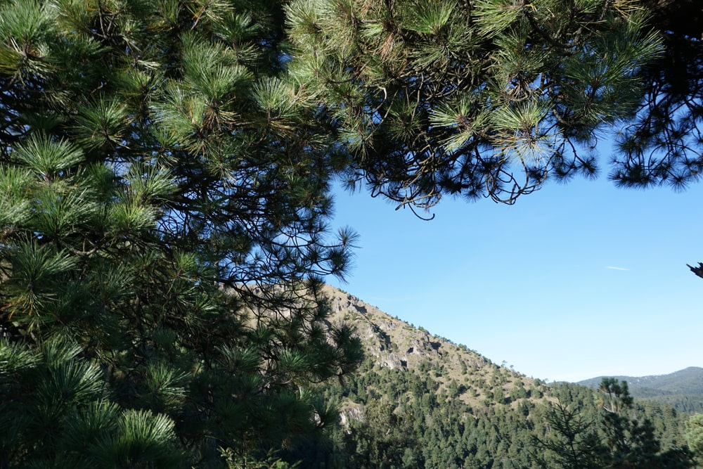 green tree on gray mountain under blue sky during daytime