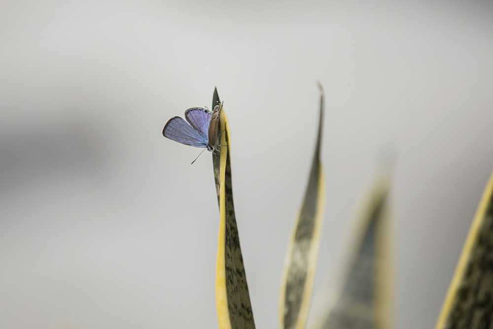 blue and white butterfly perched on yellow banana leaf in close up photography