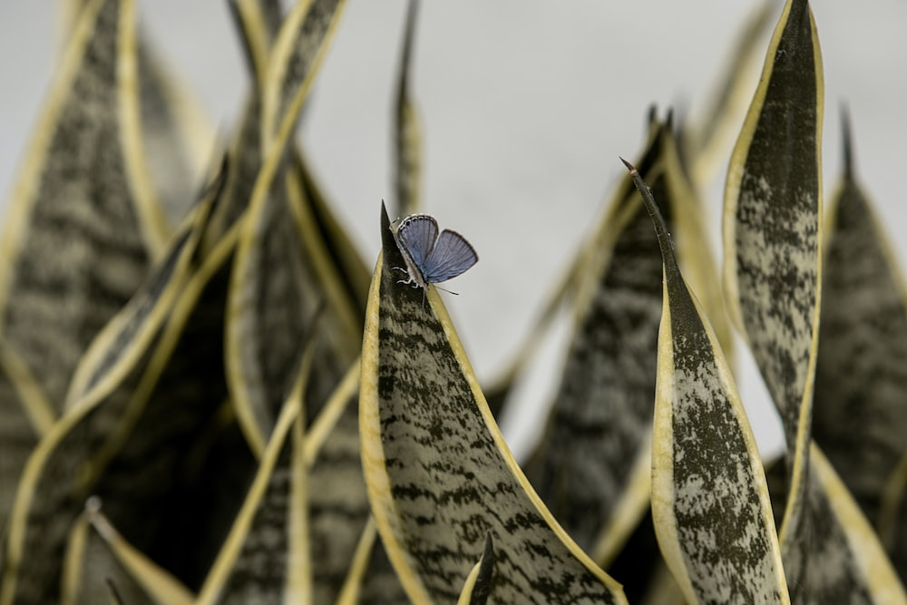 common blue butterfly perched on yellow plant