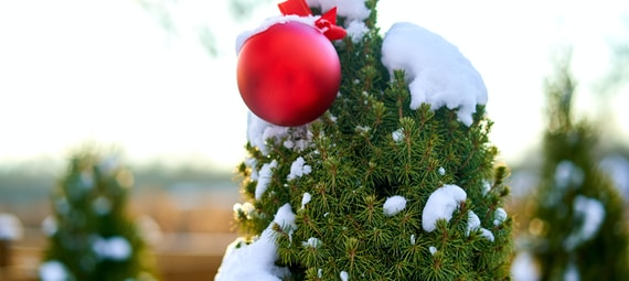 red bauble on green christmas tree covered with snow