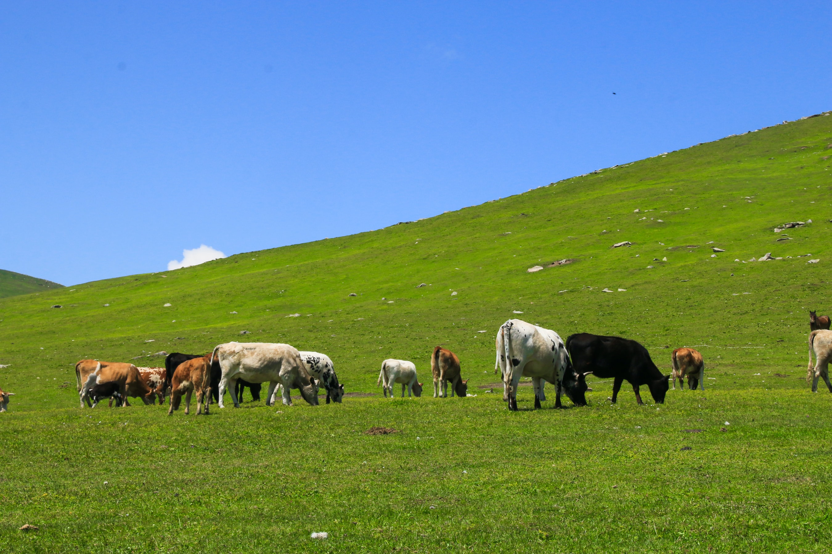 How Holistic Planned Grazing Works in 60 Seconds
