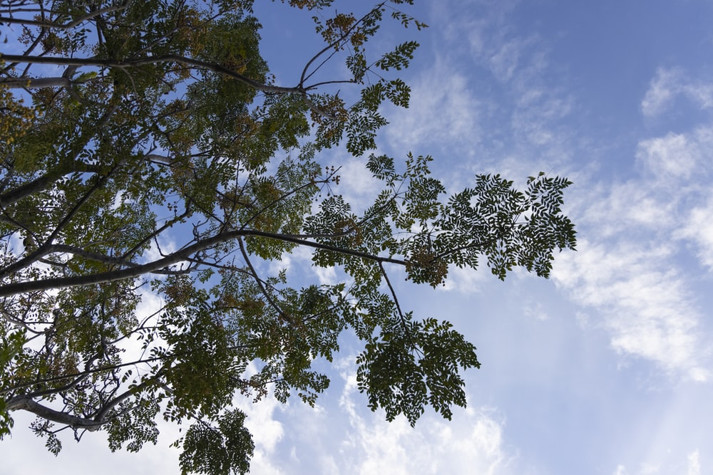 green tree under white clouds and blue sky during daytime