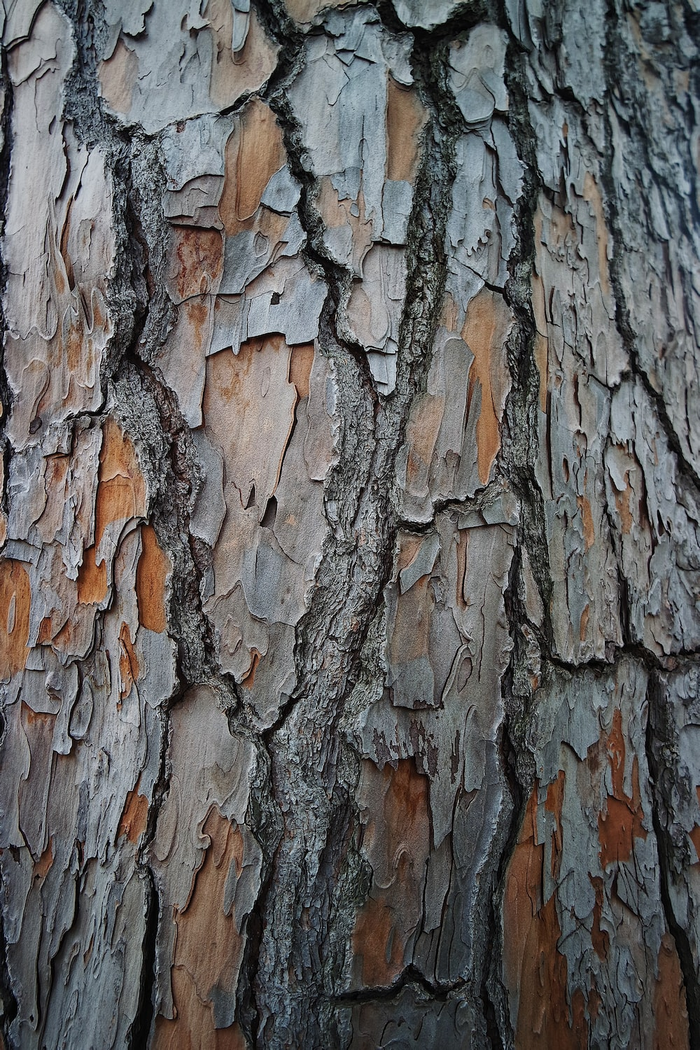 brown and gray tree trunk