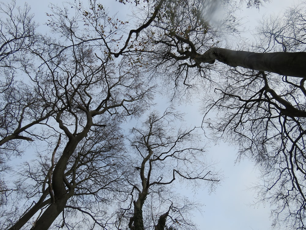 low angle photography of leafless tree under white clouds