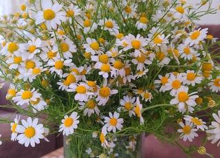 white and yellow flowers in clear glass vase