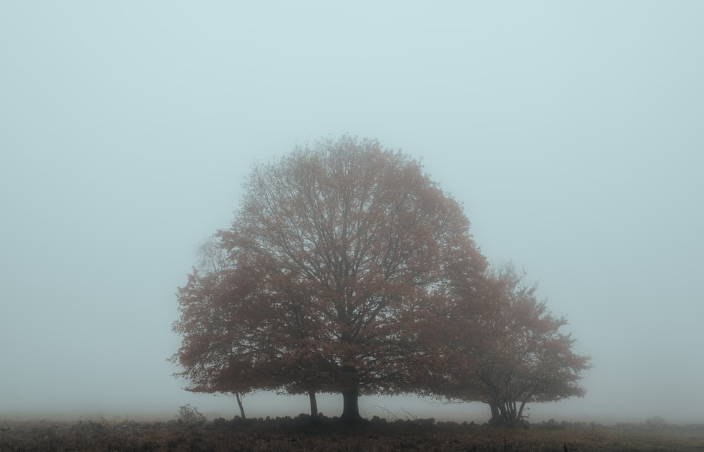brown tree on field during daytime