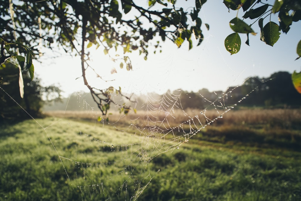 spider web on green grass field during daytime