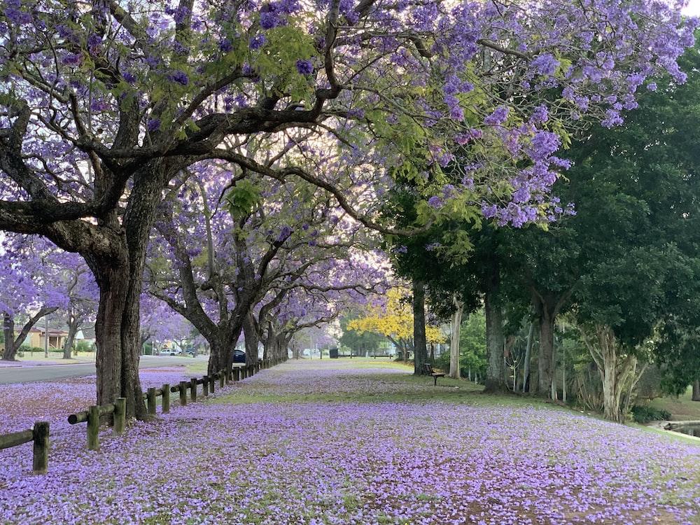 Flower Garden Pics