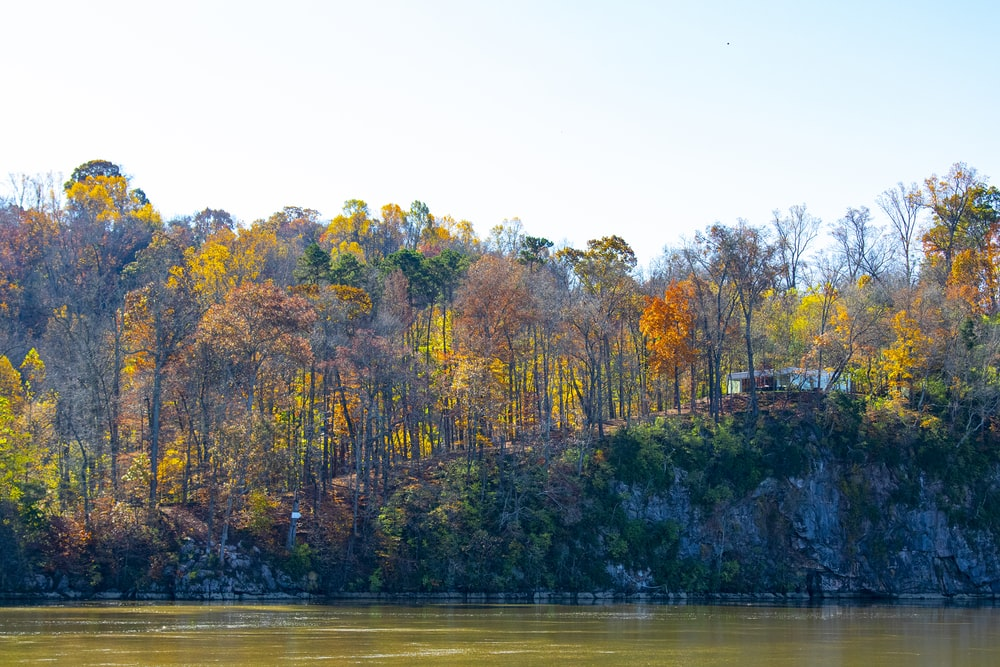 green and brown trees beside body of water during daytime