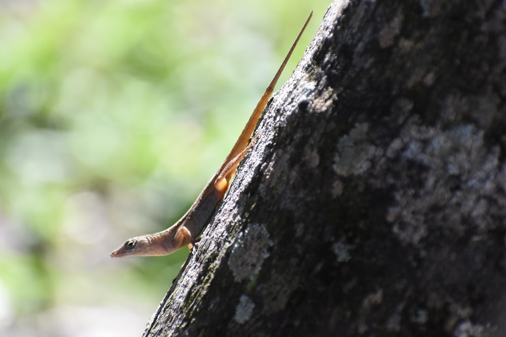 brown and white lizard on brown tree trunk