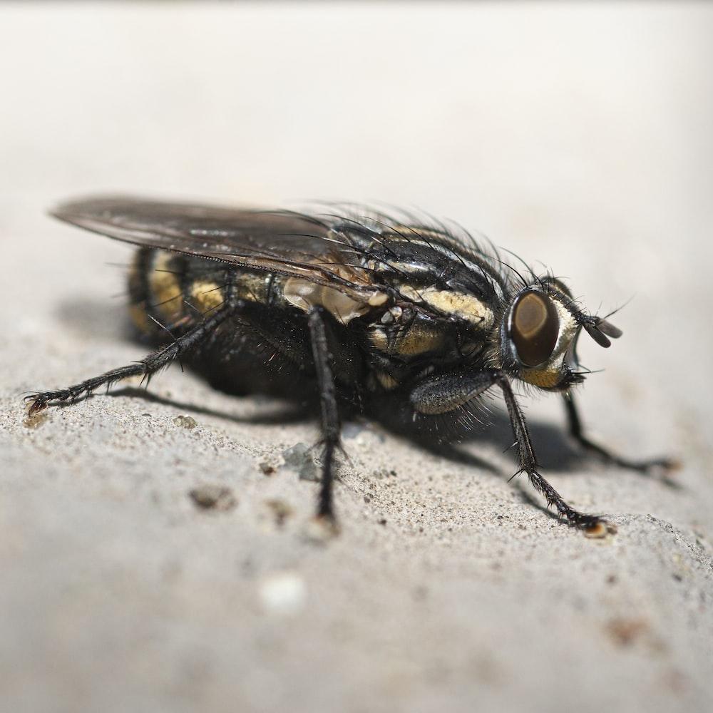 black fly on white textile
