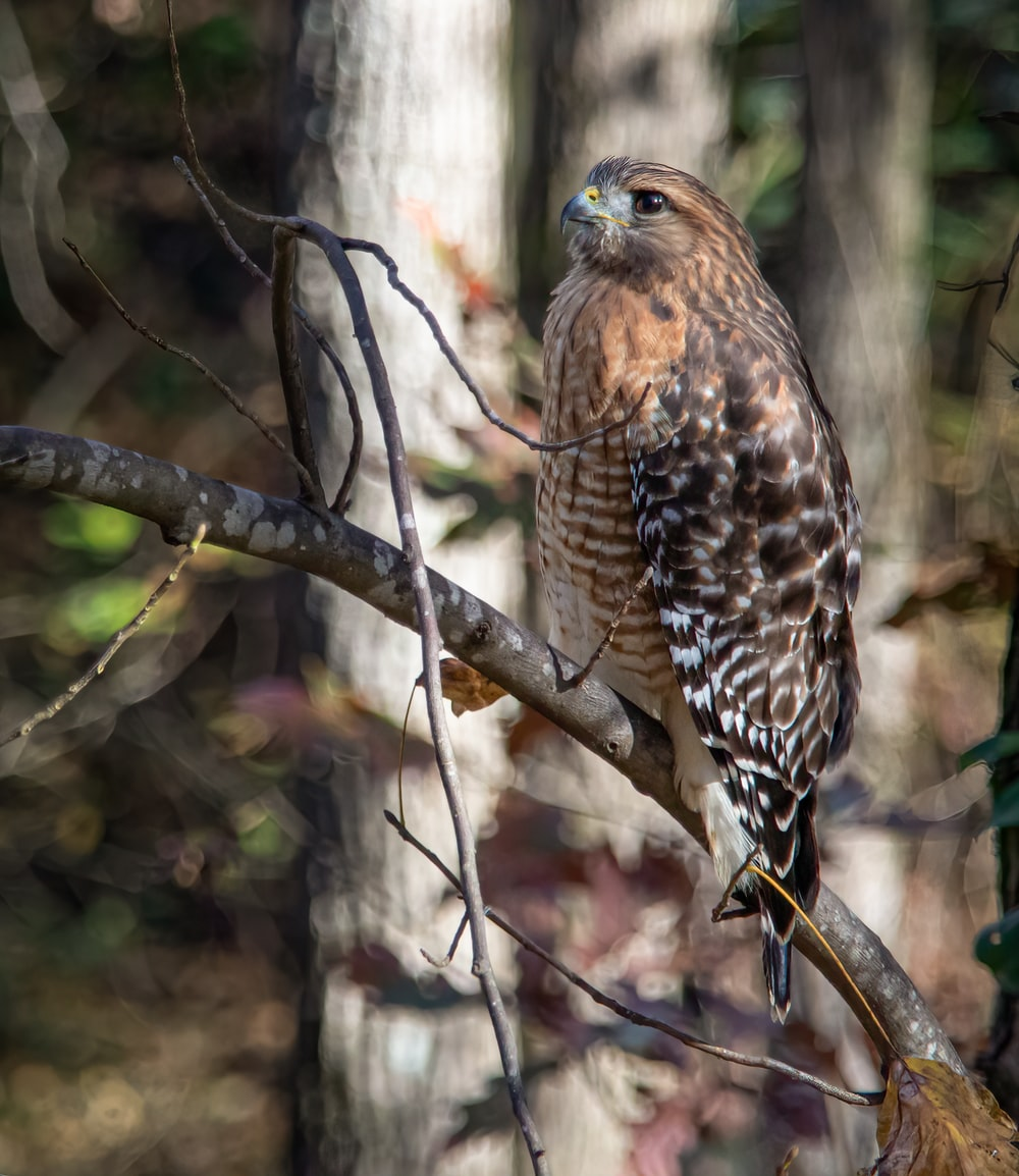 brown and white owl on tree branch during daytime