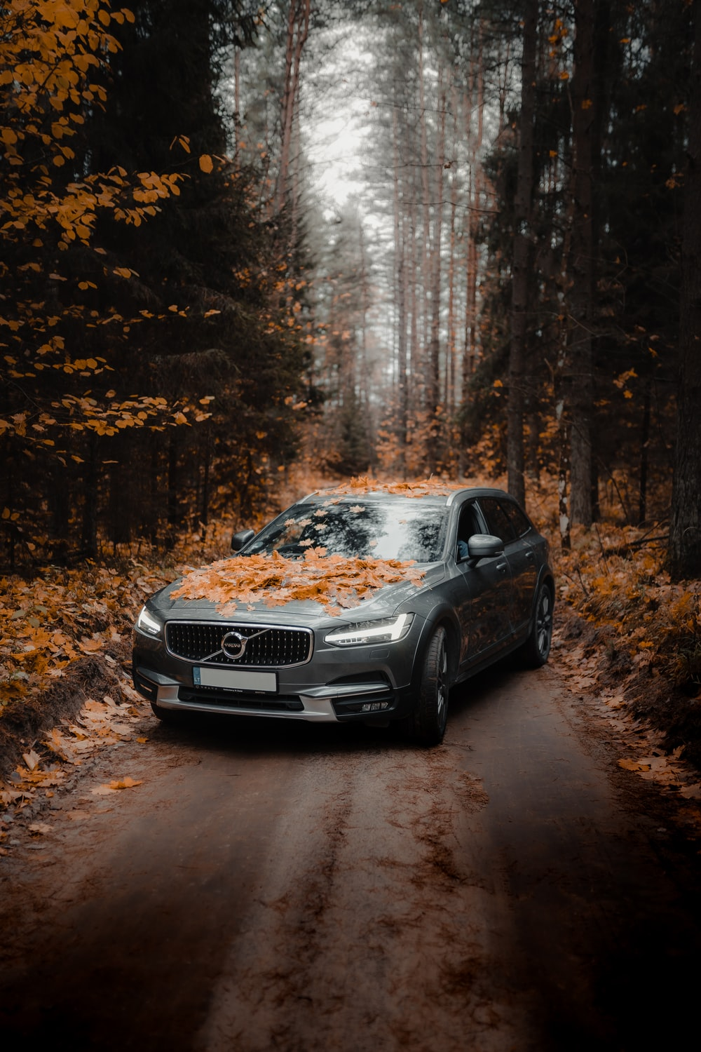 black audi a 4 on forest