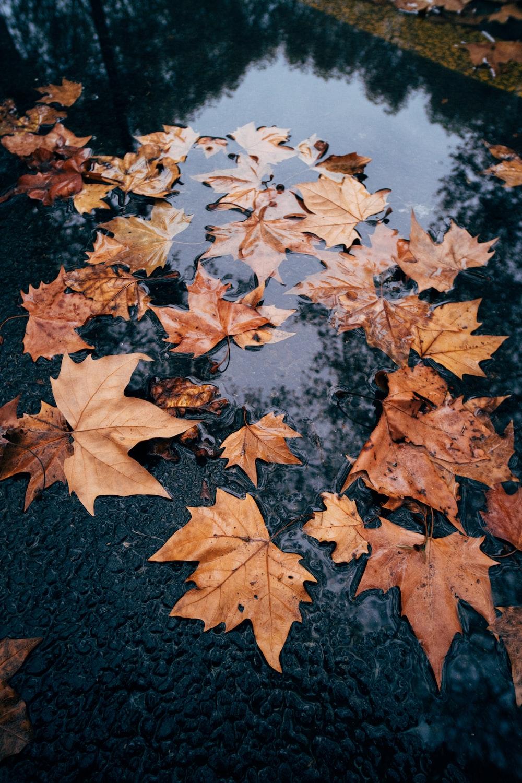 brown maple leaves on black concrete floor