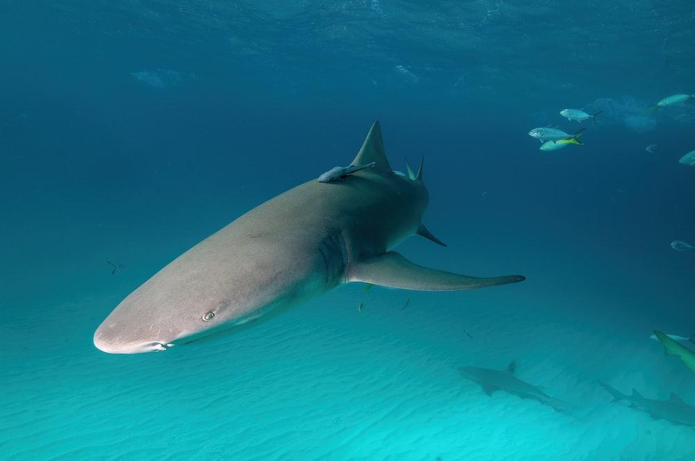 gray shark under water during daytime