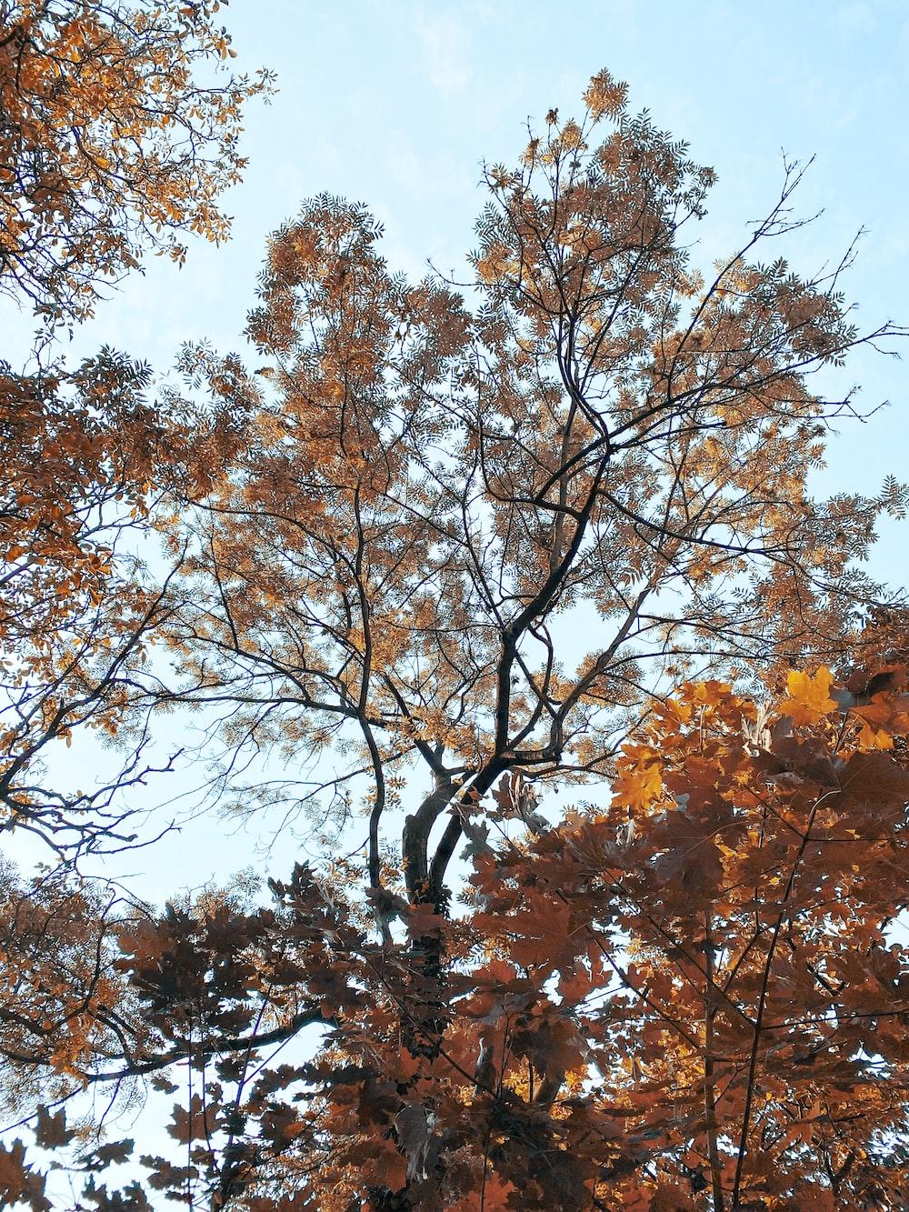 brown leaf tree under blue sky during daytime