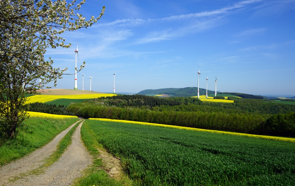 green grass field near wind turbines under blue sky during daytime