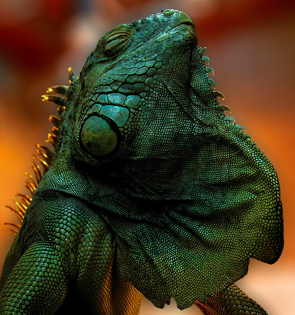 green and brown bearded dragon