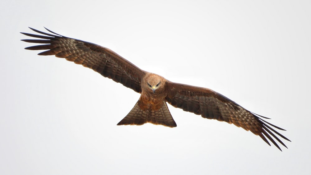 brown and white owl flying