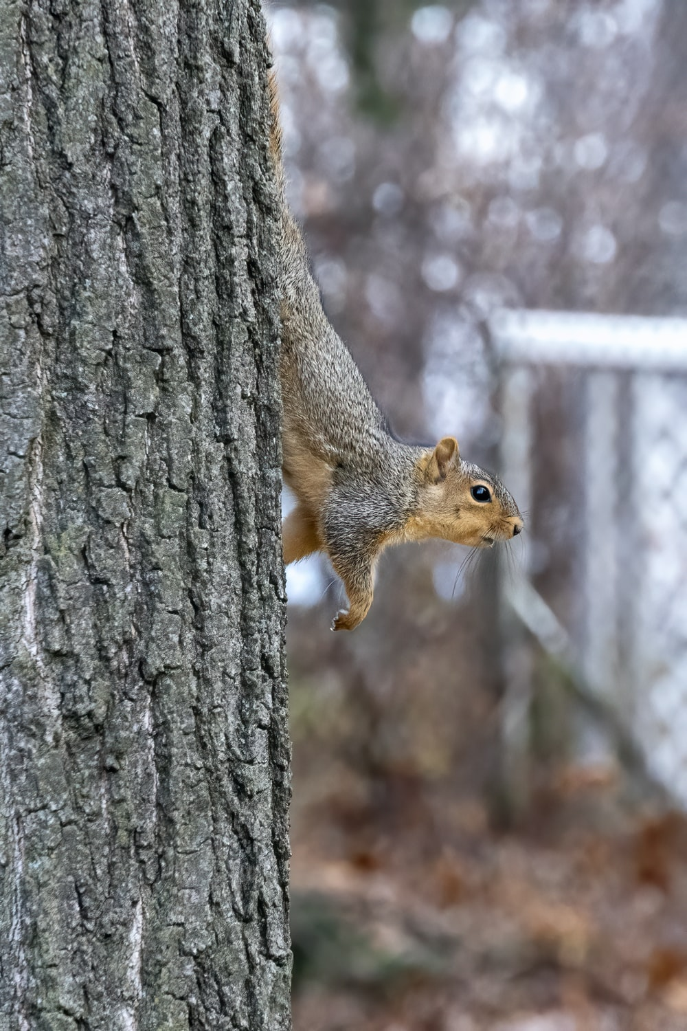 brown squirrel on brown tree trunk during daytime