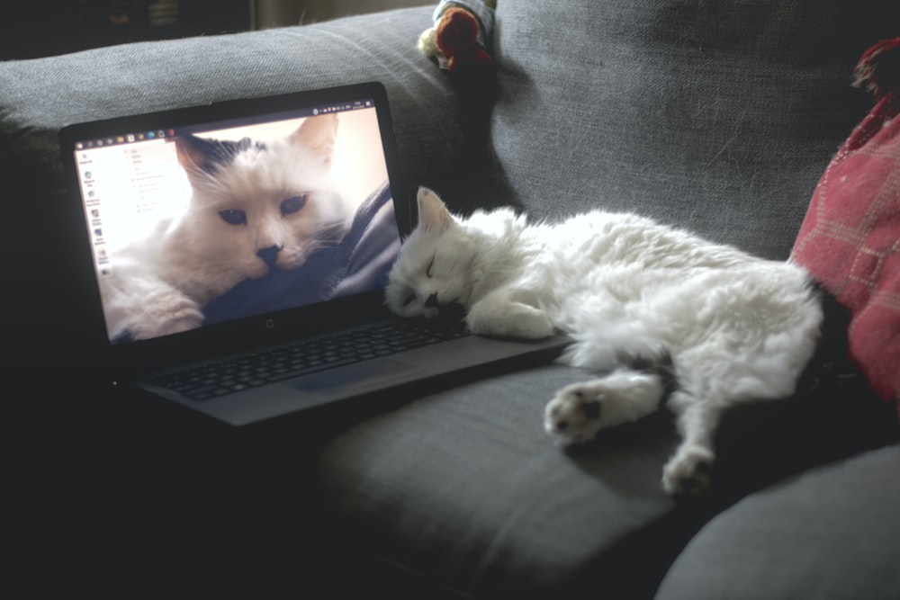 white cat lying on black couch