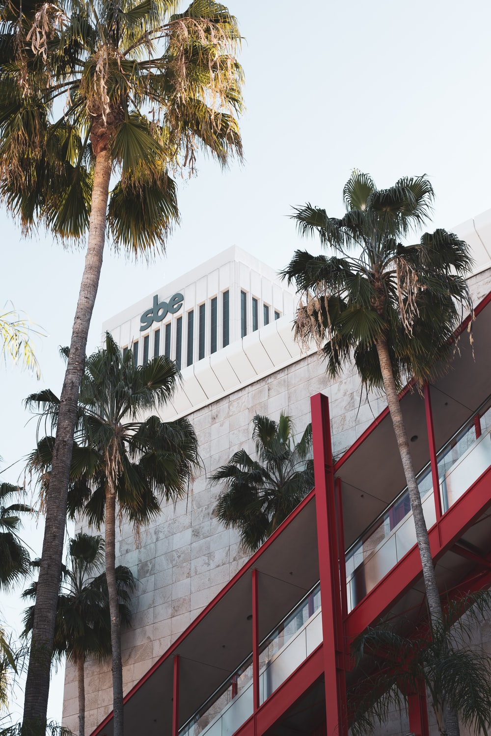 green palm tree near white concrete building