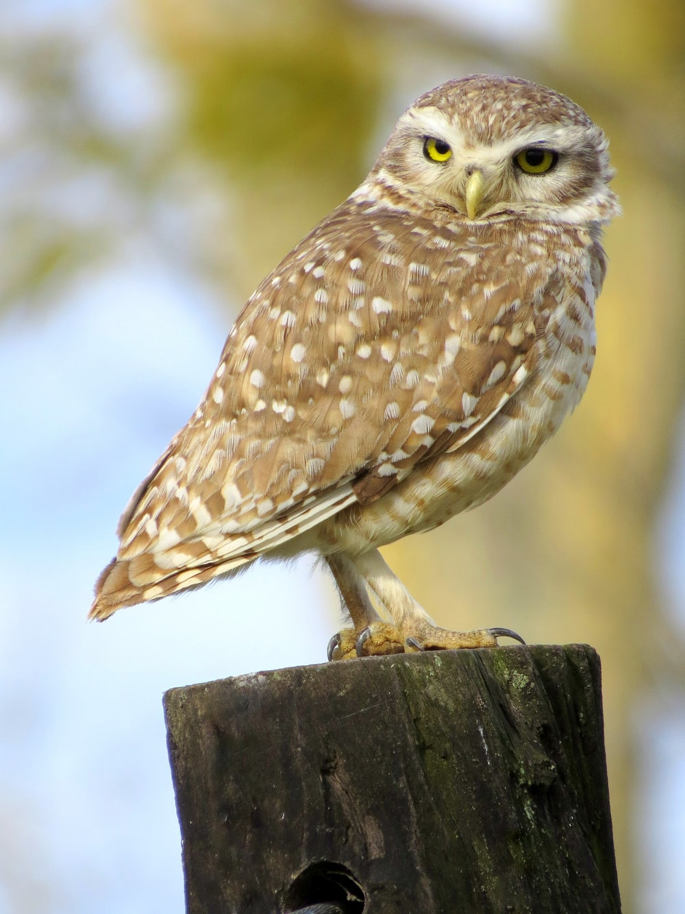 brown and white owl on brown wooden post during daytime