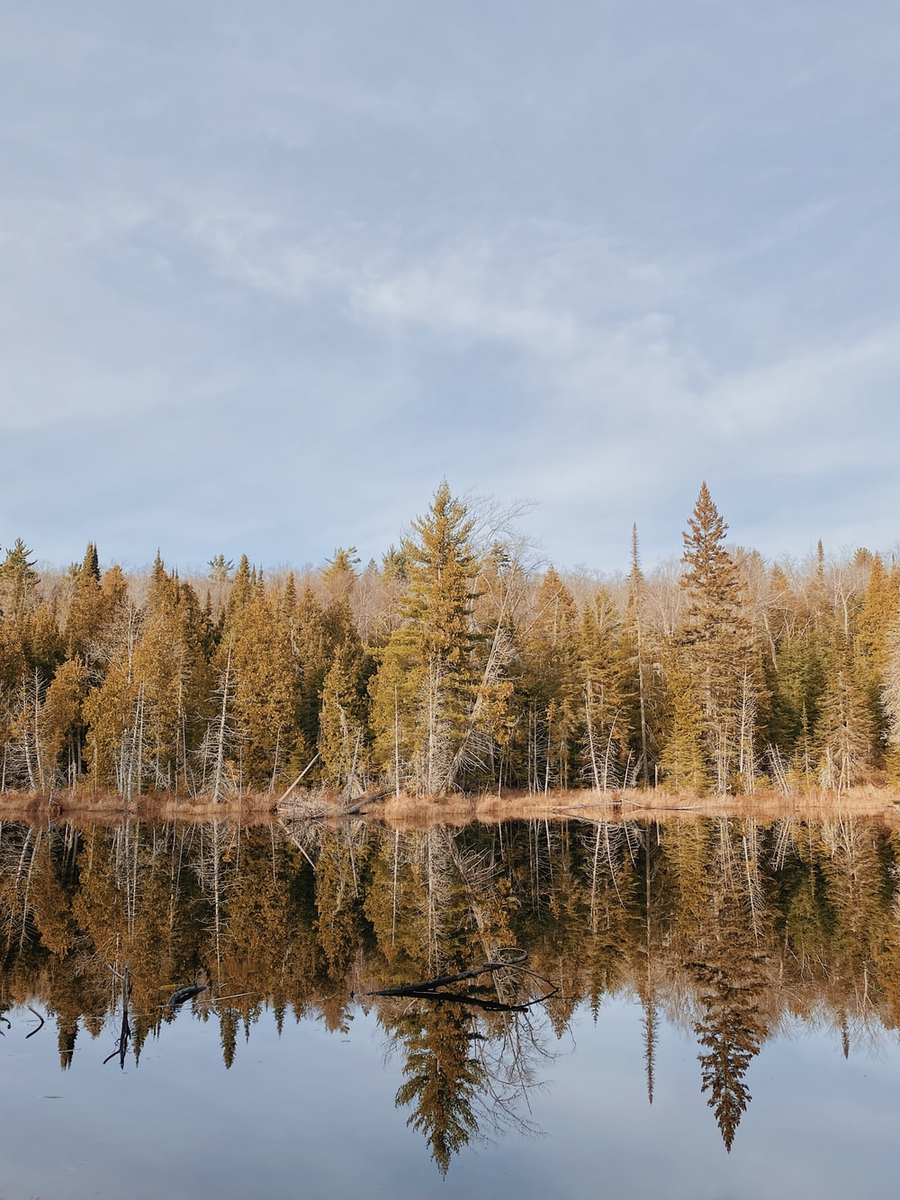 green and brown trees beside body of water under white clouds and blue sky during daytime