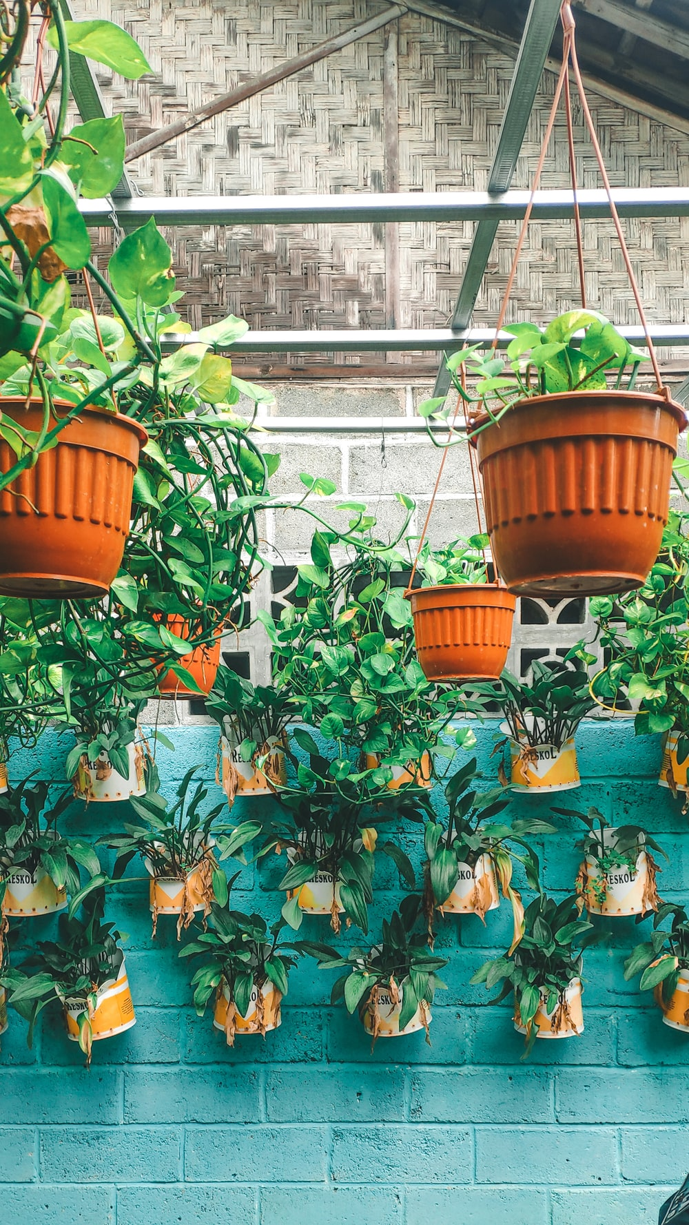 green and blue potted plants