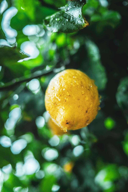 yellow fruit in tilt shift lens
