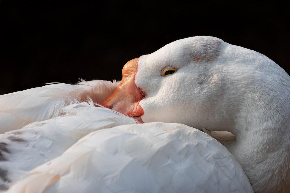 white duck on white textile