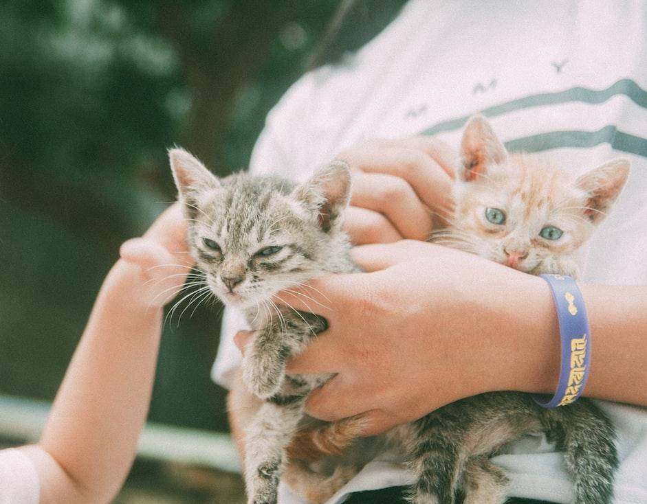adopting-a-kitten